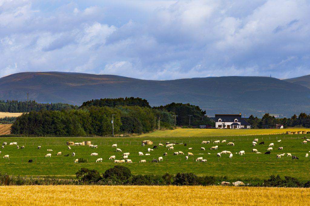 La campagna attorno a Tain Highlands