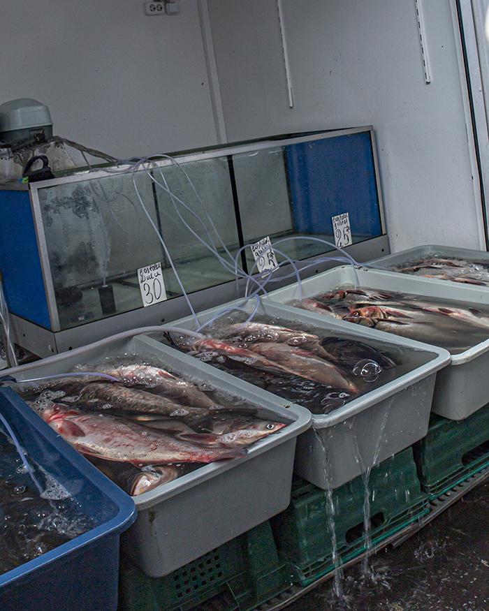 moldavia chisinau mercato Piaţa Centrală pesce