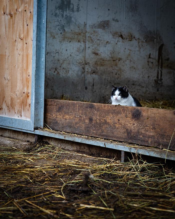agritur soreie gatto