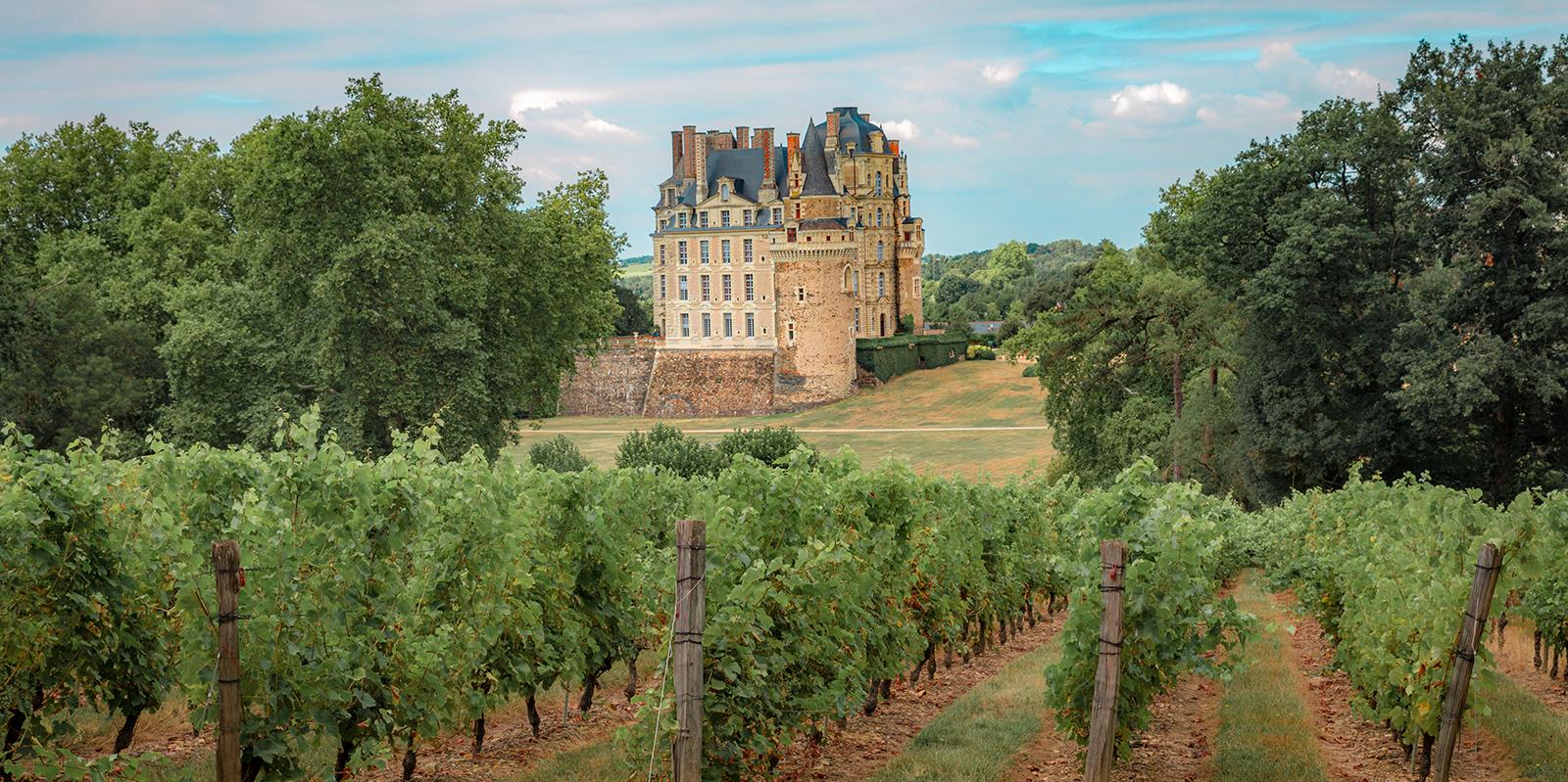 Chateau de brissac vigne